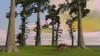 Kentrosaurus walking through a grassy field Poster Print - Item # VARPSTKVA600530P