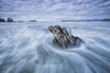 The tide coming in and flowing around a sunken piece of driftwood, chesterman beach;Tofino, vancouver island, british columbia, canada PosterPrint - Item # VARDPI2325121