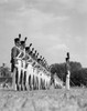 1940s A Row Of Uniformed Military College Cadets At Dress Parade Chester Pennsylvania Print By Vintage Collection - Item # VARPPI176403