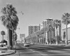 1960s Rows Of Palm Trees Central Avenue Phoenix Az Usa Poster Print By Vintage Collection - Item # VARPPI178851