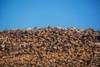 Stack of firewood pile against blue sky Poster Print - Item # VARPPI169591
