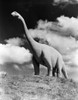 1950s Life-Size Statue Of Extinct Long Neck Gigantic Brontosaurus Dinosaur Park Established 1936 Rapid City South Dakota - Item # VARPPI179022