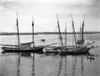 1930s-1940s Sailing Ships At Anchor Havana Harbor Cuba Poster Print By Vintage Collection (22 X 28) - Item # PPI178723LARGE