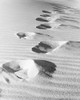 1950s Footsteps In Sand Dunes Poster Print By Vintage Collection (22 X 28) - Item # PPI186737LARGE