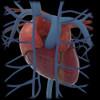 3D rendering of human heart and thoracic veins Poster Print - Item # VARPSTSTK701159H