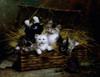 Kittens In A Basket by Leon-Charles Huber  Poster Print - Item # VARSAL900137300