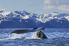 View of Humpback whale lifting its tail as it dives under the surface at sunset, Inside Passage, Southeast Alaska PosterPrint - Item # VARDPI12251581