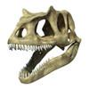 3D rendering of an Allosaurus skull Poster Print - Item # VARPSTVET600018P