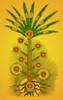 Tree of Life, Etz haChayim Poster Print by Science Source - Item # VARSCIBP6290