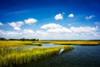 Wetland Herons II Poster Print by Alan Hausenflock - Item # VARPDXPSHSF2215