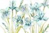 Watercolor Iris Landscape Poster Print by Tre Sorelle Studios - Item # VARPDXRB11668TS