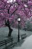 New York City Central Park Blossom Poster Poster Print - Item # VARSCO33790