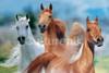 Three Horses - Bob Langrish Poster Poster Print - Item # VARIMPST5523R