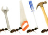Carpenter Ants (Camponotus Pennsylvanicus) PosterPrint - Item # VARDPI1831657