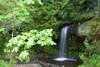 Waterfall In The Forest PosterPrint - Item # VARDPI1861022