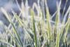 Frozen Blades Of Grass PosterPrint - Item # VARDPI1860844