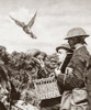 Wwi: Carrier Pigeon. /Na Carrier Pigeon Being Released To Carry A Message To The French Headquarters During World War I. Photograph, C1916. Poster Print by Granger Collection - Item # VARGRC0407982