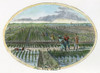 Rice Plantation, 1867. /Nrice Culture In The American South. Engraving, 1867. Poster Print by Granger Collection - Item # VARGRC0009314
