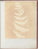 "Felce Poster Print by William Henry Fox Talbot (British  Dorset 1800  ""1877 Lacock) (18 x 24) - Item # MET289193"