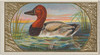 Canvas-Back Duck  from the Game Birds series (N13) for Allen & Ginter Cigarettes Brands Poster Print (18 x 24) - Item # MET407929