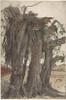 "Study of a Stump with Aerial Roots Poster Print by Woldemar Friedrich (German  Gnadau 1846  ""1910 Berlin) (18 x 24) - Item # MET383907"