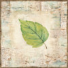Nature Walk Leaves IV Poster Print by Cynthia Coulter - Item # VARPDXRB12007CC