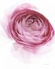 Pink Lady IV Poster Print by Elizabeth Urquhart - Item # VARPDX33337