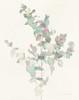 Eucalyptus II Poster Print by Danhui Nai - Item # VARPDX34501