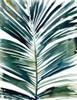 Tropical palm Poster Print by Megan Swartz - Item # VARPDX540SWA1372