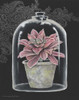 Succulent in Cloche III Poster Print by Gwendolyn Babbitt - Item # VARPDXBAB243
