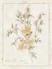 Flowers on White II with Words Poster Print by Wild Apple Portfolio - Item # VARPDX27675