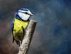 Overwatch Bird Poster Print by P.S. Art Studios - Item # VARPDXPL1477