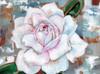 Rose Poster Print by Anne Seay - Item # VARPDXAE1217