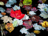 Autumn Leaves Poster Print by David W. Pollard - Item # VARPDXP1122D