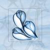 Triplet Shells on Blue Poster Print by Albert Koetsier - Item # VARPDXAKXSQ330B