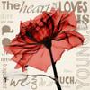 Red Rose Love Poster Print by Albert Koetsier - Item # VARPDXAKXSQ341E