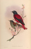 Birds of Asia 1850 Red Oriole Poster Print by  John Gould - Item # VARPPHPDP88462