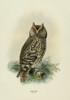 Birds of Europe 1881 Scops Owl Poster Print by  John G. Keulemans - Item # VARPPHPDP89835