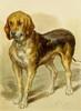 Studies in Animal Painting 1885 Bloodhound Poster Print by  Frederick Tayler - Item # VARPPHPDA70318