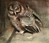 Natural Hist of Highlands 1919 Young Brown Owl Poster Print by  E. Alexander - Item # VARPPHPDP89173