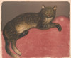 Cat on a Cushion 1909 Poster Print by  Th_ophile Steinlen - Item # VARPPHPDA64602