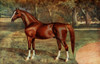 The Horse 1906 Arab stallion  Mesaoud Poster Print by Unknown - Item # VARPPHPDA61751