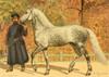 Les Races Chevalines 1894 Pravdine Poster Print by  M. Bounine - Item # VARPPHPDP88477
