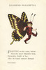 Butterfly Babies 1914 Palamedes Swallow-tail Poster Print by  M.T. Ross - Item # VARPPHPDA70381