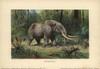 Mastodon  A Large Tusked Mammal Species Ofà Poster Print By ® Florilegius / Mary Evans - Item # VARMEL10937708
