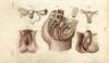 Female Genital Organs Poster Print By ® Florilegius / Mary Evans - Item # VARMEL10939611