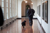 President Barack Obama Runs Down The East Colonnade With Family Dog Bo On His Initial Visit To The White House March 15 2009. Bo Came Back To Live At The White House In April. History - Item # VAREVCHISL026EC041