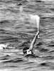 1968 Olympics History - Item # VAREVCSBDNISICS005