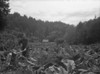 1930'S Oregon Pioneer. After Taking Over An Abandoned Homestead In The Oregon Hills History - Item # VAREVCHISL033EC183