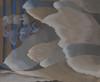 Reaching Waves Fine Art - Item # VAREVCHISL045EC155